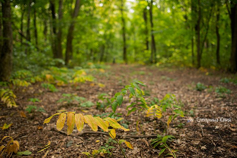 """Осень цвета """"изумруд"""""""