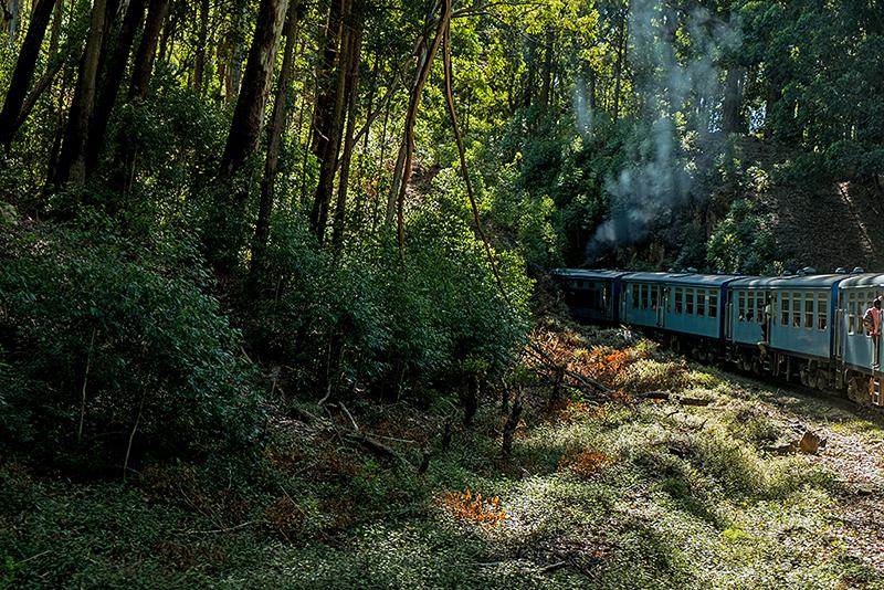 Шри-Ланка, июнь 2017. Элла, малый Пик Адама и сафари-парк Яла